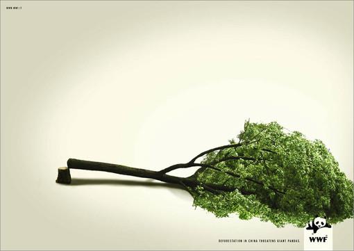 Altare, i cittadini segnalano l'abbattimento di 10 platani secolari: interviene il WWF