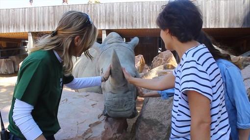 """Zoom Torino protegge i rinoceronti bianchi del Parco Nazionale Pilanesberg in Sudafrica con il progetto """"Adotta un rinoceronte"""""""